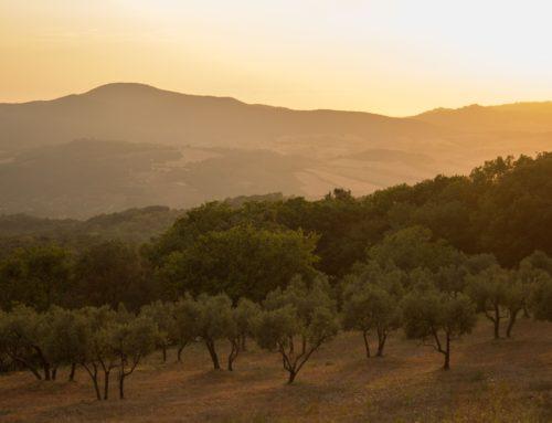 El olivar representa más del 50 % de la superficie de riego de Andalucía y tiene una relevancia social y económica clave para el medio rural andaluz